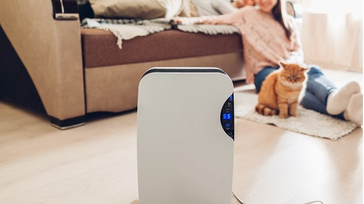 The 7 Best Dehumidifiers For Basement Use