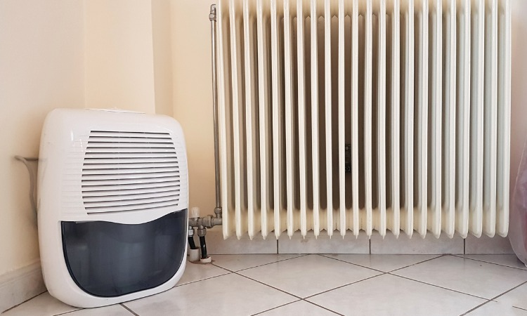 The 7 Best Dehumidifiers With Pumps